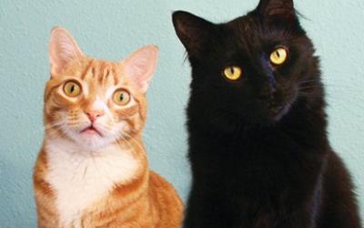 Quand les chats s'emparent des réseaux sociaux!