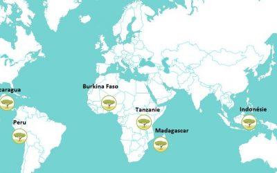 Ecosia : une recherche, un arbre replanté