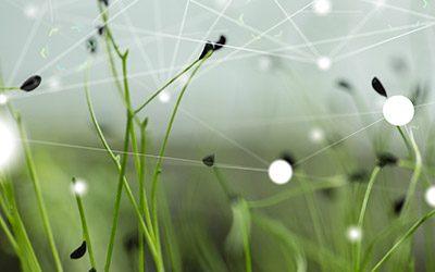 Bonne résolution 2019 : réduire l'impact carbone du Web